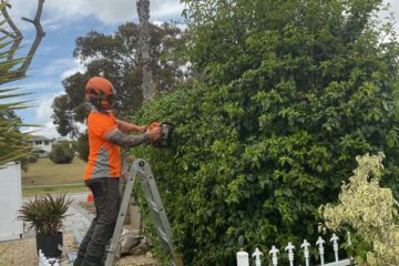 Hedging arborist Perth