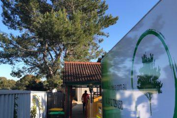 tree removal Perth Arborist