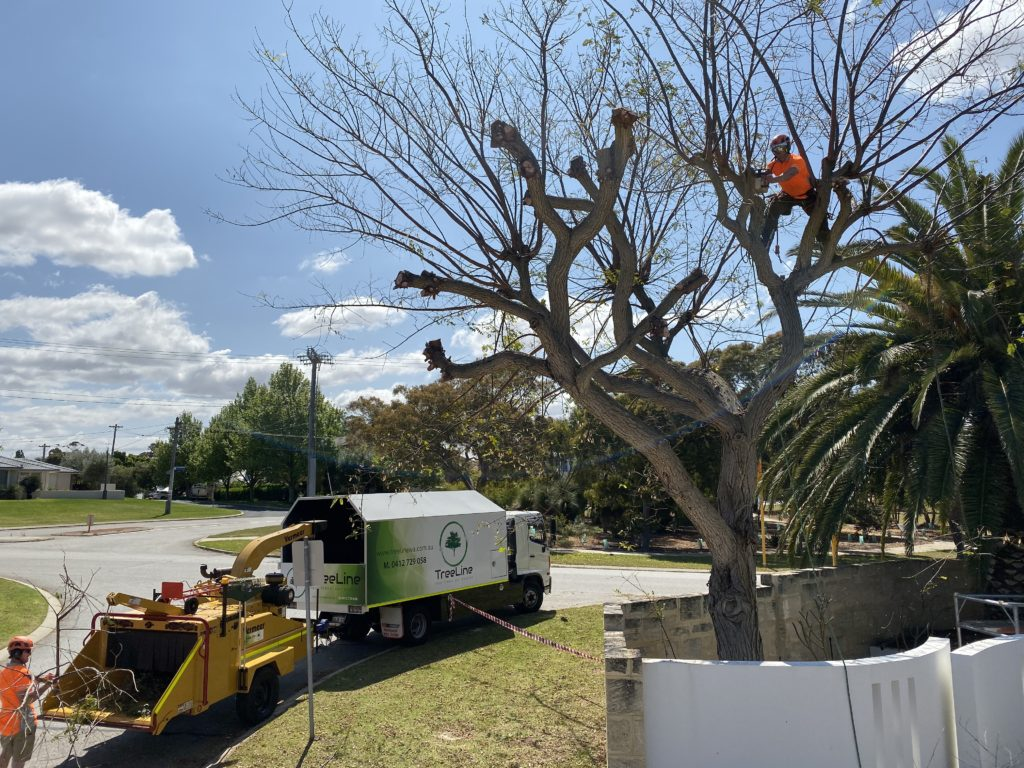 Tree pruning front page