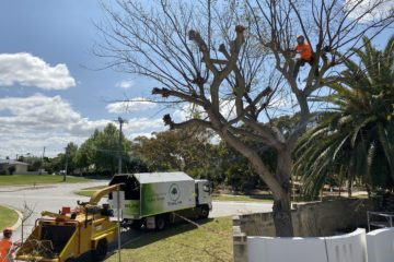 Tree pruning arborist Perth