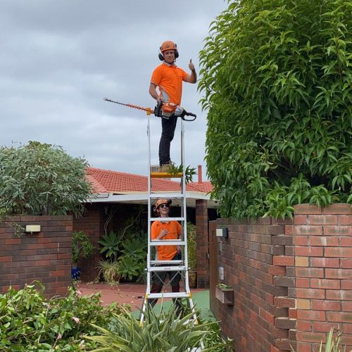 Hedge Trimming Services Perth